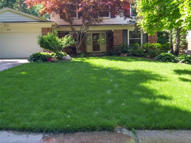 Lawn Aeration Company - Livonia MI - Independent Lawn Service - Aftter_ILS
