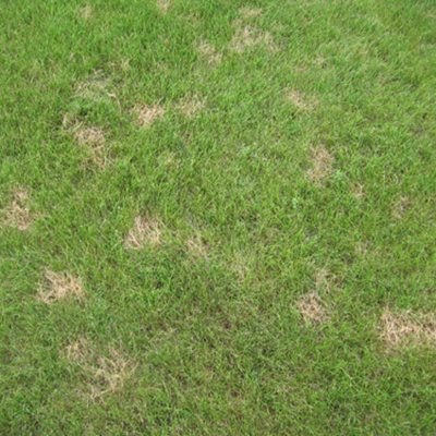 Common Lawn Problems - Visual Guide Online - dollar_spot