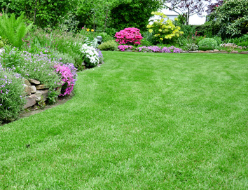Shrub Care Company Ypsilanti MI - Independent Lawn Service - green-lawn