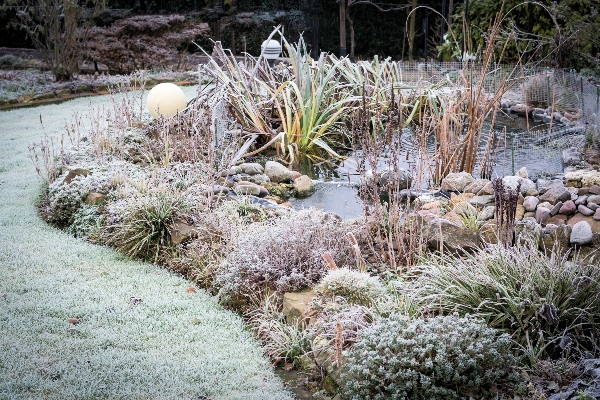A backyard garden that has all been crusted by frost.